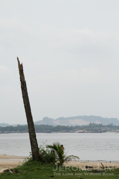 Coconut trees with their tops struck off by lightning were once a common sight in much of rural Singapore, including in Punggol.