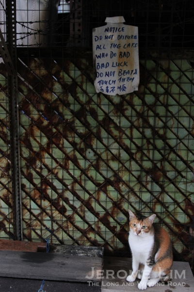 A signs warning against the mistreatment of cats in the back lane. The alley cat is still very much a part of the back lane scene.