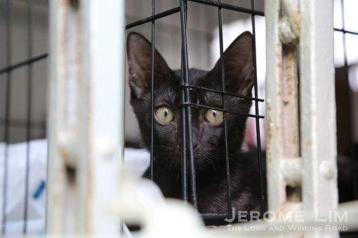 A cat in a cage.