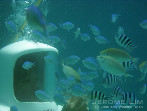 Getting acquainted with the fishies during the helmet dive.