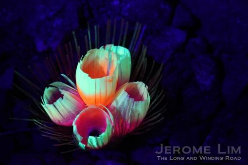 JeromeLim 277A2159