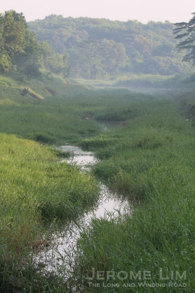 A very natural looking man made stream close to the area where a village, Kampong Beremban, once was.