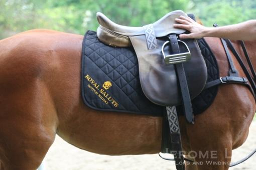 The saddle.