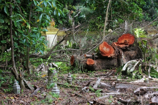 Tree clearing at Jalan Kubor. Several historic grave sites in Singapore are under threat of being cleared.