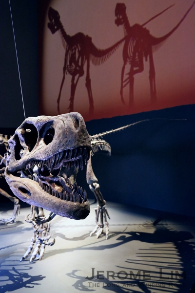 One from herd of Herrerasaurus that greets visitors at the exhibition's entrance.