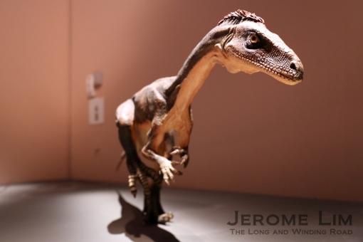 JeromeLim 277A2525