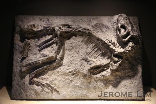 JeromeLim 277A2574