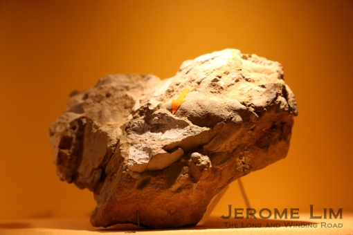 Exhibits include coprolites - fossilised 'droppings' that provide insights into diets.