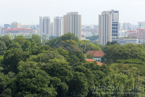 A look towards the greenery surrounding the grounds of the Istana.