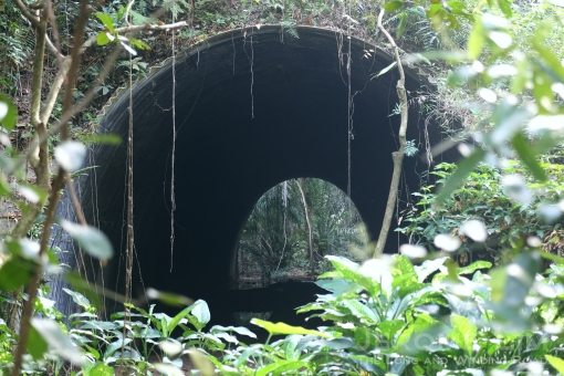 A view through the former railway tunnel under Clementi Road.