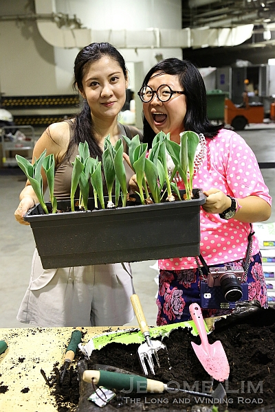 Happy tulip planters.