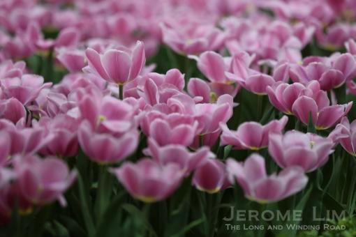 JeromeLim 277A4999
