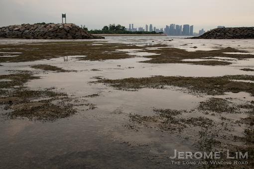 JeromeLim-0356
