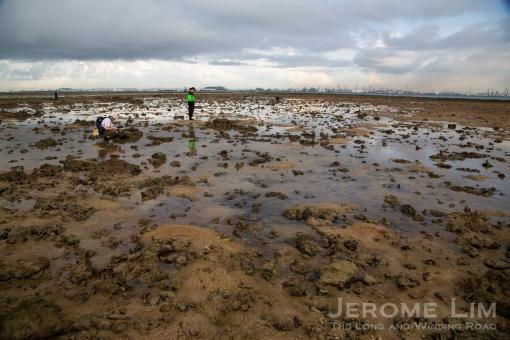 JeromeLim-3049 Terumbu Pempang Laut 20140601