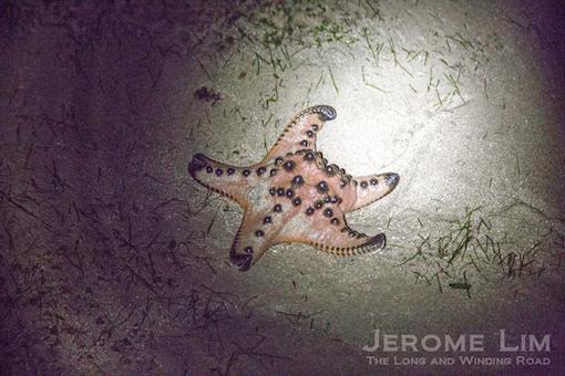 JeromeLim-6083