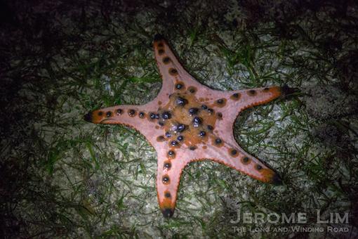 JeromeLim-6090