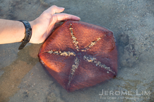 The underbelly of a cushion star.