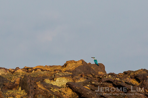 And another perched on a rock.