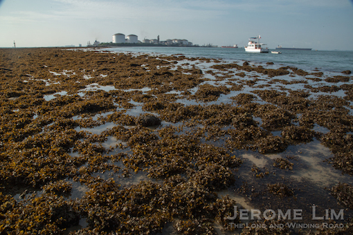 The fringing reef on the island's south-east reaching out towards the oil terminal at Sebarok.