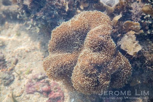 JeromeLim-6610