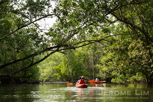 Paddling through the watery forest at Sungei Khatib Bongsu.