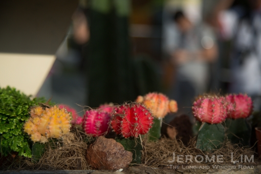 JeromeLim-8862