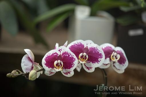 JeromeLim-8978