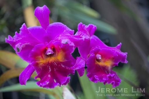JeromeLim-8993