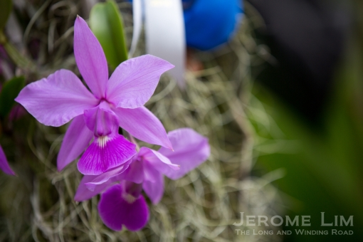 JeromeLim-8997