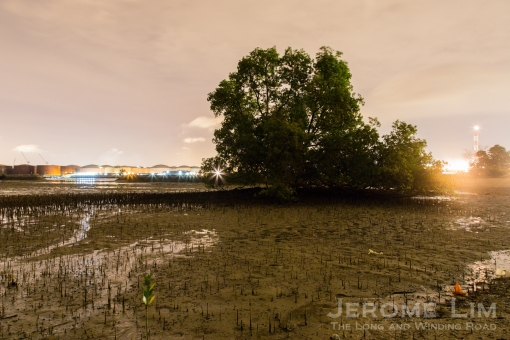 An are of mangroves on the northern shore of Pulau Hantu Besar.