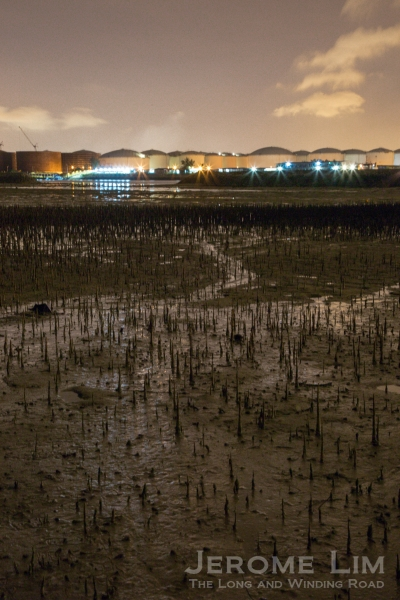 The view across the inter-tidal mud flat towards what would once have been Pulau Busing.
