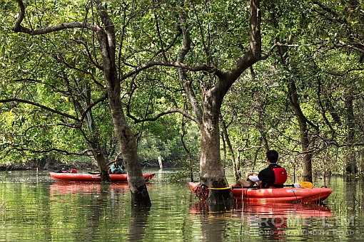 Kayaking through the Sungei Pandan mangroves.
