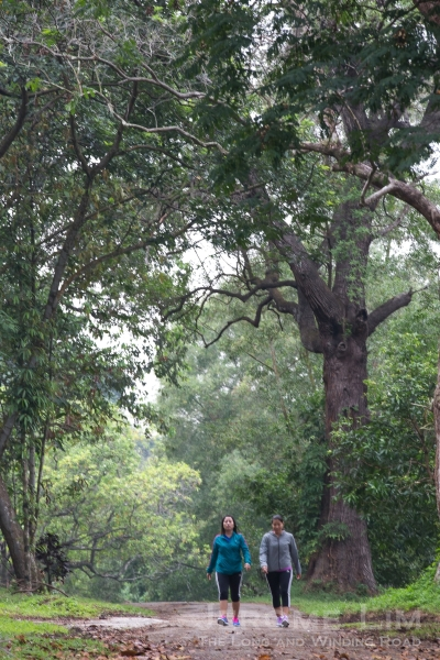 The wooded oasis that is now the grounds of the former Bidadari Muslim Cemetery.