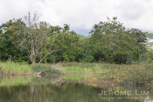 JeromeLim-0703