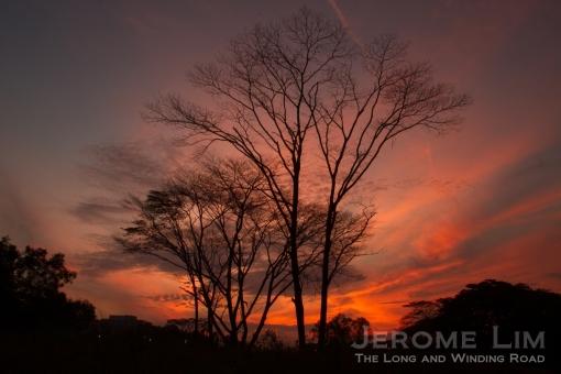 JeromeLim-3658
