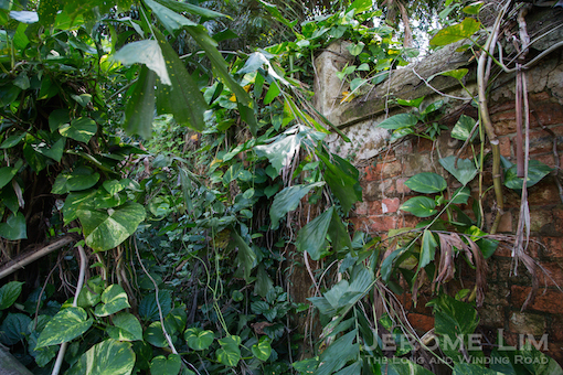Part of the wall lies partially hidden by the dense vegetation.