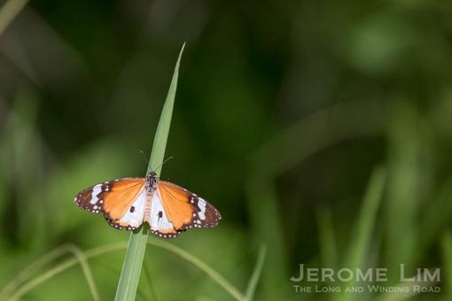 JeromeLim-3371