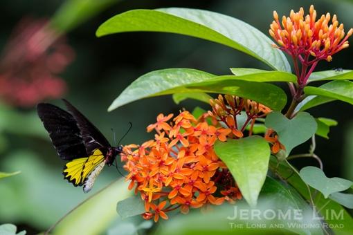 JeromeLim-3386