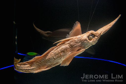 JeromeLim-3588