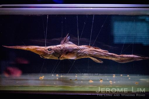 JeromeLim-3778