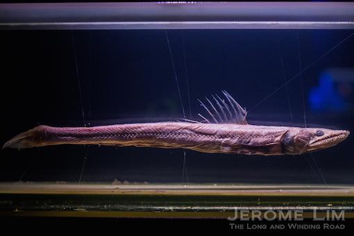 JeromeLim-3786