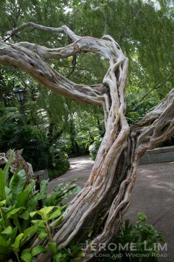 The most vandalised tree.