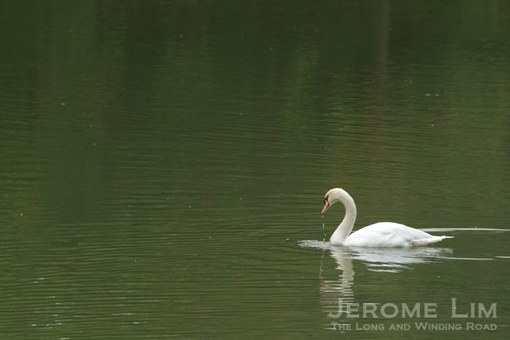 Swan Lake, Singapore's first ornamental lake.