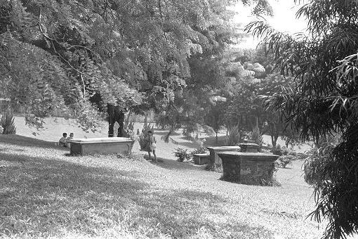 The garden, still with a scattering of graves, in 1974 ( (photo online at http://www.nas.gov.sg/archivesonline/).