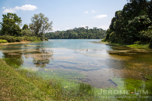 (48) Another of MacRitchie Reservoir.