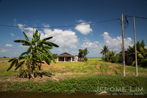 Another view of the paddy fields.