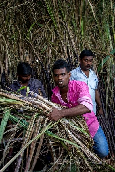 Sugarcane - signifying sweetness and longevity.