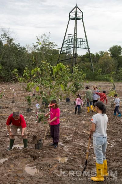 The mangrove arboretum.