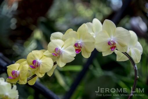 JeromeLim-0301-2