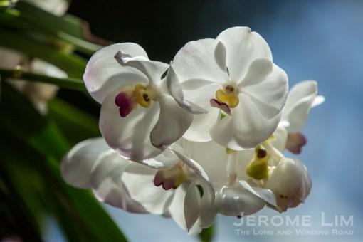 JeromeLim-9947